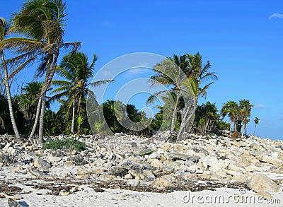 Beach in the Carribeans