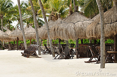 Beach Chairs under Palm Trees on Tropical Beach