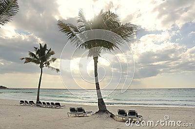 Beach Chairs under Palm Trees on Tropical Beach