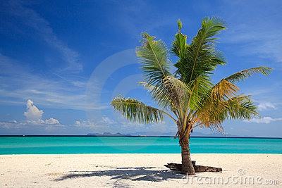 Beach and Coconut palm, Lipe island,Thailand