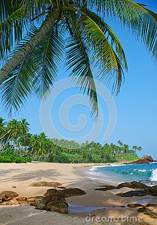 Beach with coconut palm trees
