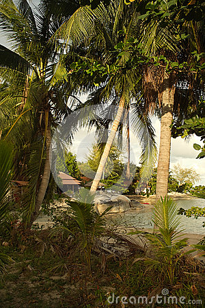 Beach and coconut palm trees in Thailand
