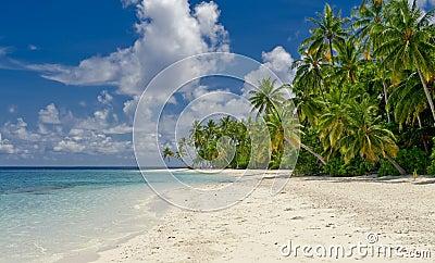 Beach with coconut palm on tropical island