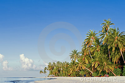 Beach with coconut palm on tropical island