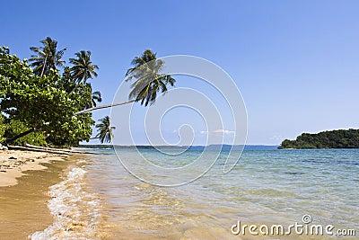 beach with coconut tree
