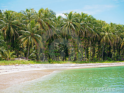 Beach with coconuts trees in Panama