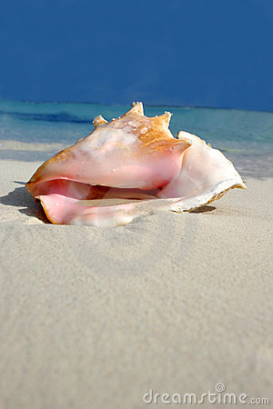 Free Beach Conch Series Stock Photography - 239392
