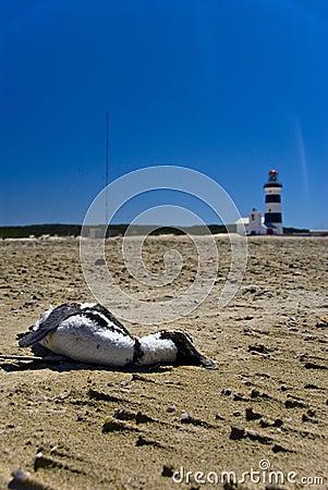 Beach of desolation