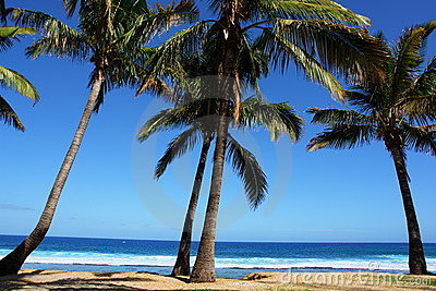 Beach of dream has the shade o