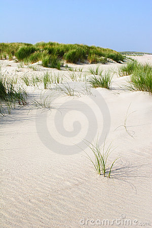 Beach Dunes with Grass