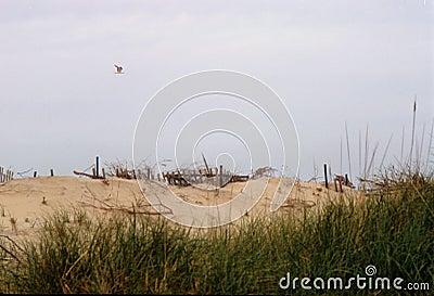 Beach Dunes - Still Life