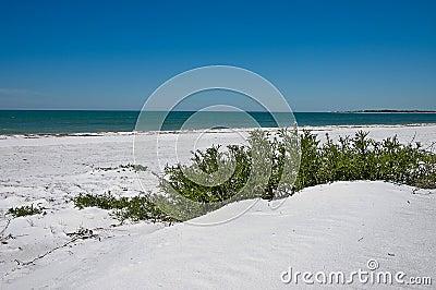 Beach Fauna