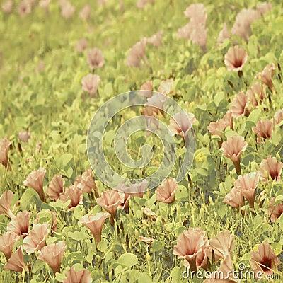 Beach flower art on canvas background