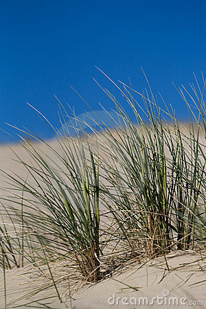 Free Beach Grass In Sand Dunes Royalty Free Stock Photos - 5346838