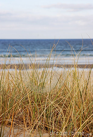Beach grass the sea