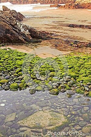 Beach of green stones