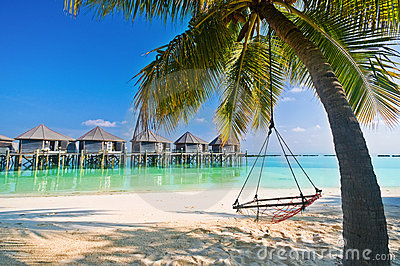 beach hammock under palm trees stock images - image: 16182194