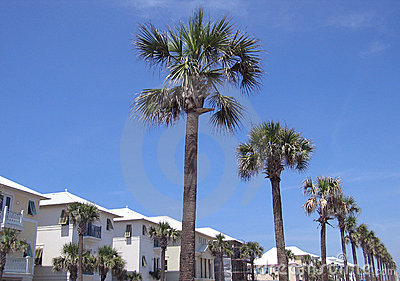Beach Homes and Palm Trees