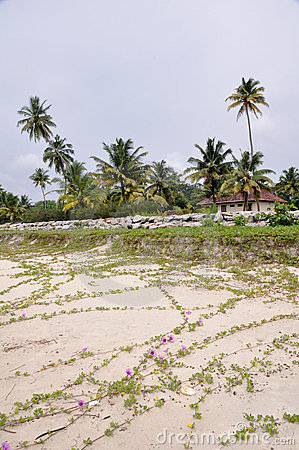 Beach in kerala, (India)
