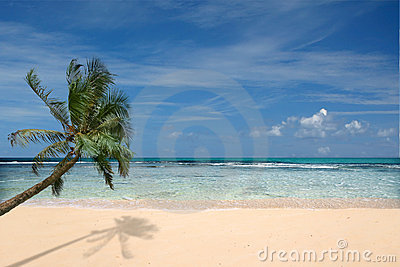 Beach With Lone Palm Tree