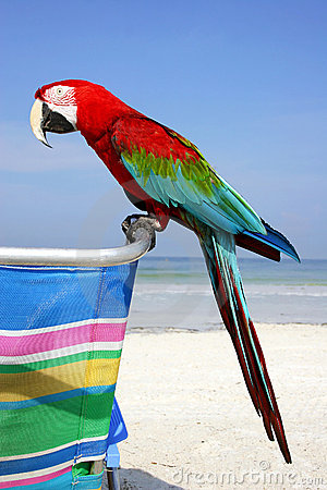 Free Beach Macaw Royalty Free Stock Images - 294219
