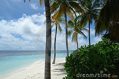 Beach on a Maldive Island