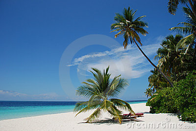 Beach In The Maldives Royalty Free Stock Photography - Image: 8448217