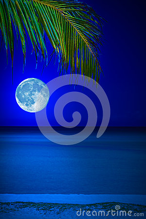 Beach at night with the moon and a palm tree