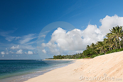 Beach on the north shore of Oahu, Hawaii