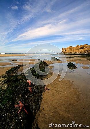 Beach in northern oregon