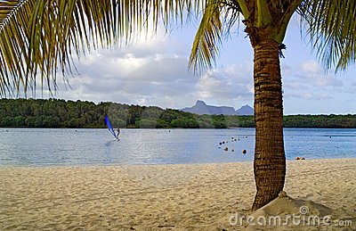 Beach with palm tree and distant windsurfer
