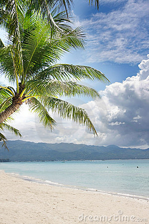 Beach and palm tree on sea and sky background