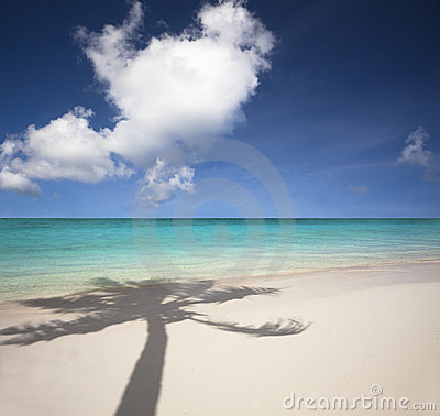 beach and palm tree shadow