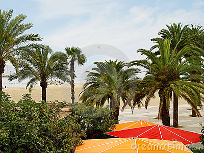 Beach with palm trees.