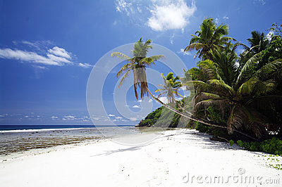 Beach with palm trees at Anse Parnel, Seychelles