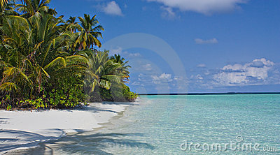 beach and palm trees under the sun