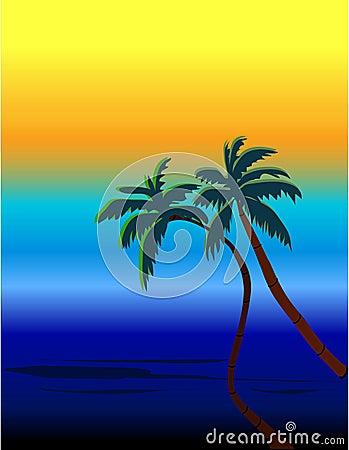 Beach and palms