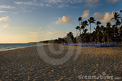 Beach with palms with blue sun lounges