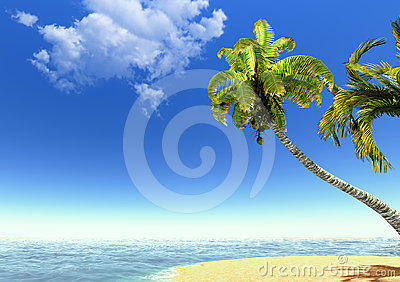 Beach, palms and sea