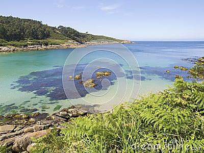 Beach paradise with ferns