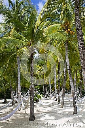 Beach Paradise Hammock under Palm