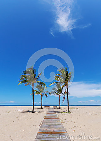 Beach path with palms