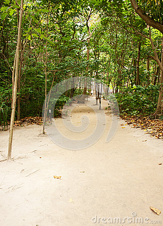 Beach Pathway through tropical forest