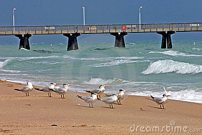 Beach with Pier and Birds