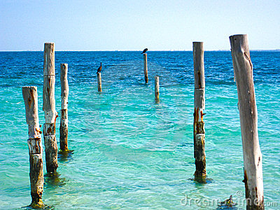 Beach Pier Posts With Birds Stock Images - Image: 5494114