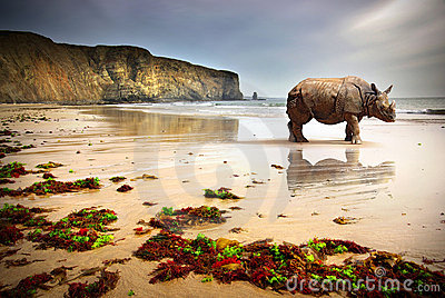 Beach Rhino Royalty Free Stock Photos - Image: 14333448