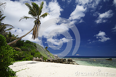Beach with rocks and palm trees at Anse Forbans, Seychelles