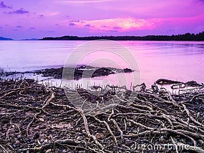 Beach with roots on sea, sky purple sunset
