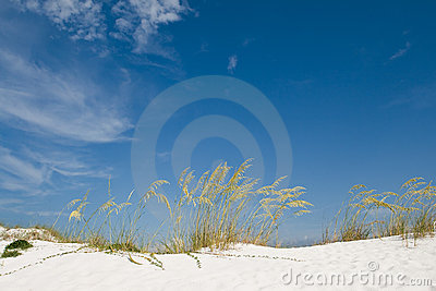 Beach sand dune with grasses and cane