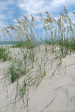 Free Beach Sand Dunes Royalty Free Stock Photography - 9758177